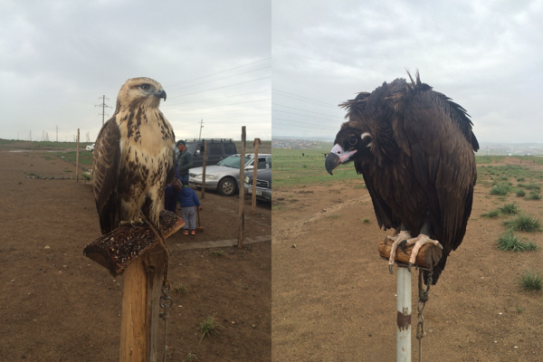 Image shows an eagle on the left and a vulture on the right