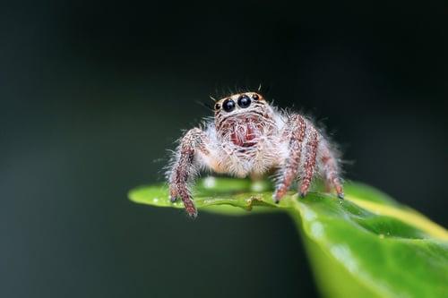 spider-hydraulic